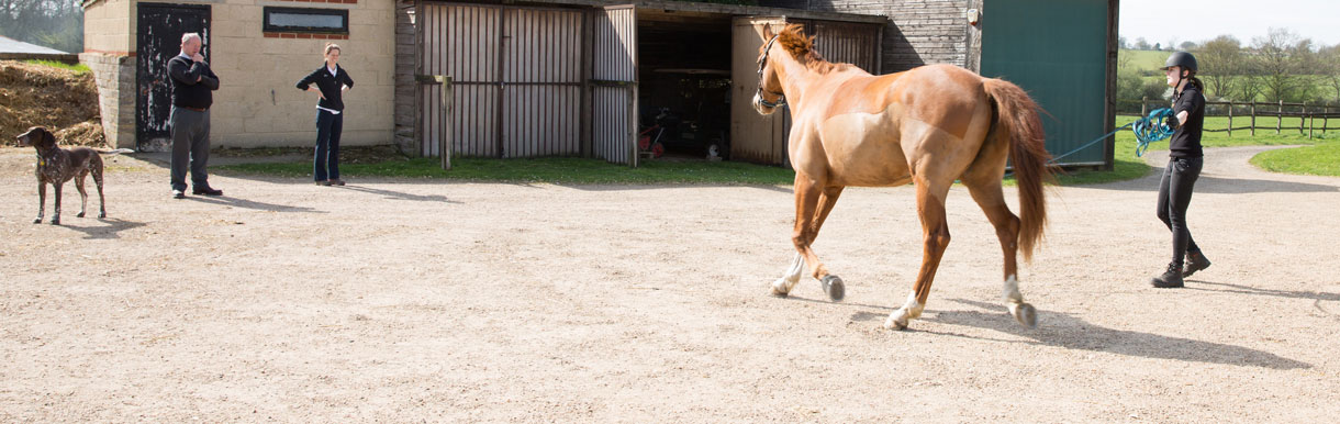 Redwings Horse Sanctuary is our chosen charity for 2019