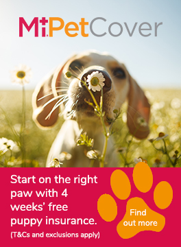 MiPet Cover puppy insurance advert